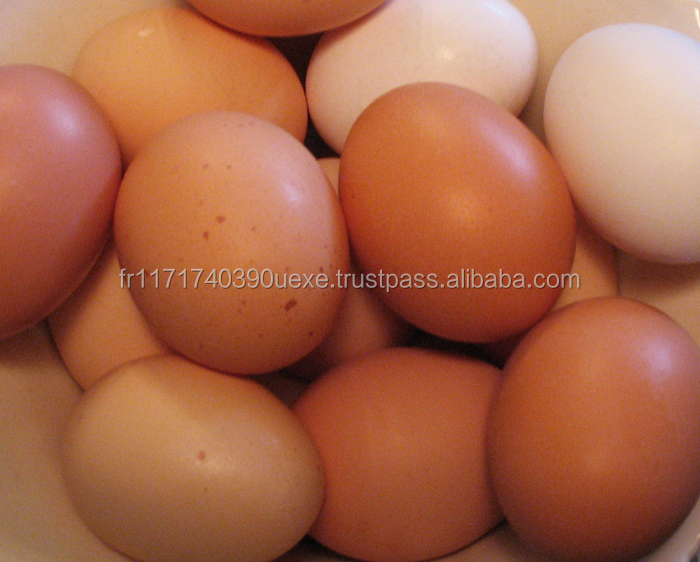 Fresh Chicken Table Eggs Brown And White Chicken Table Eggs, Fresh ...