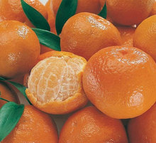 fresh mandarin orange citrus fruit from South Africa