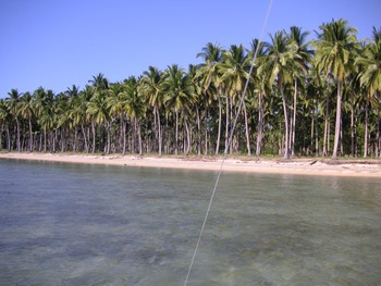 2 Km Length Beach In Quezon Palawan Philippines Buy Beach Product On Alibaba Com