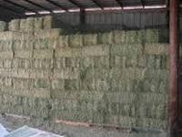 ANIMAL FEED,( YELLOW CORN , WHEAT, SOYBEANS, ALFALFA HAY, FISH MEAL, YEAST) FROM