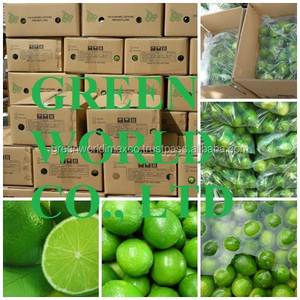 High Quality fresh seedless lime from Vietnam, best seller to Middle East