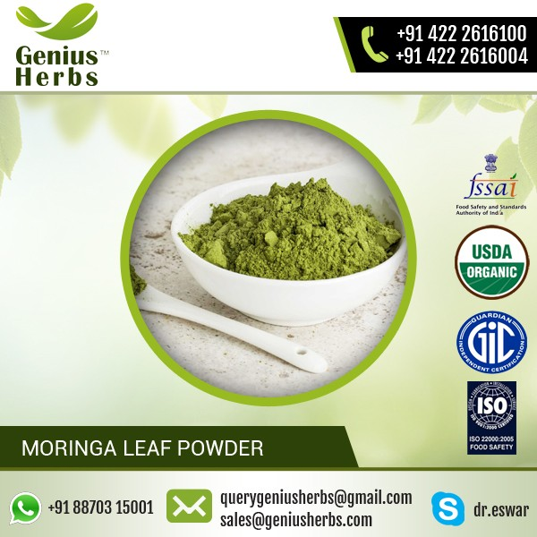 High Quality Moringa Leaf Powder Freeze Dried and Processed Under Natural Environment
