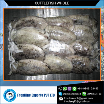 Frozen Cuttlefish Whole In Bulk Packing
