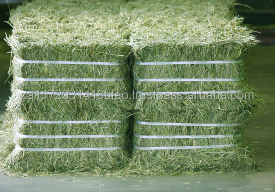 ALFALFA HAYS ( COMPRESSED BALES )