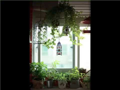 cheap office plants. Indoor Hanging Plants Window | House Or Office Picture Collection Cheap I