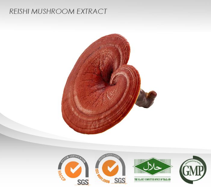 Reishi Liquid Extract : Triterpenes : Immune Enhancer,Antioxidant,Smoothes  Wrinkle - Buy Reishi Mushroom Extract Product on Alibaba com