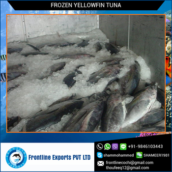 Frozen Yellow Fin Tuna Whole Round at Cheap Price