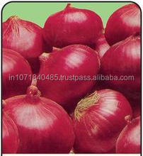 Indian Suppliers of Red Onion