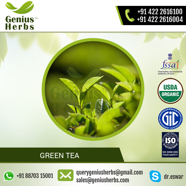 Factory Supply of GMP Certified Organic Green Tea Manufacturers Having High Quality