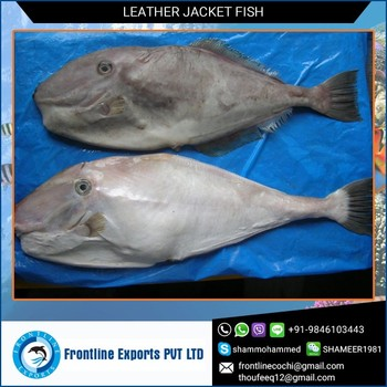 Easy to Digest Whole Fresh Leather Jacket Fish Exporter