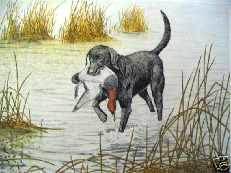 Black Lab by Dave Chapple; Limited Ed. Etching