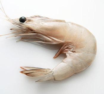Raw Vannamei Headon Whole Shrimp Hoso Buy Vannamei White Shrimp