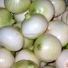 All Types Of Fresh Onions ( Red - Yellow - Gold - white - spring onion )