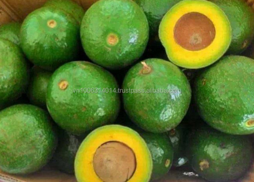 Fresh Booth Avocado From Vietnam With High Quality