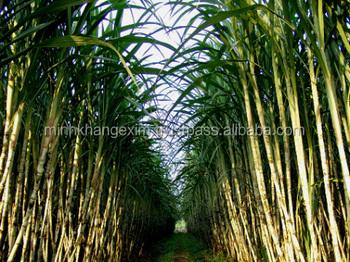 Frozen Sugarcane Sticks