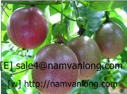 BEST PRICE OF FRESH/ FROZEN PASSION FRUIT WITH HIGH QUALITY