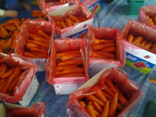 Fresh carrot viet nam