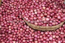 INDIAN FRESH RED NASIK ONIONS