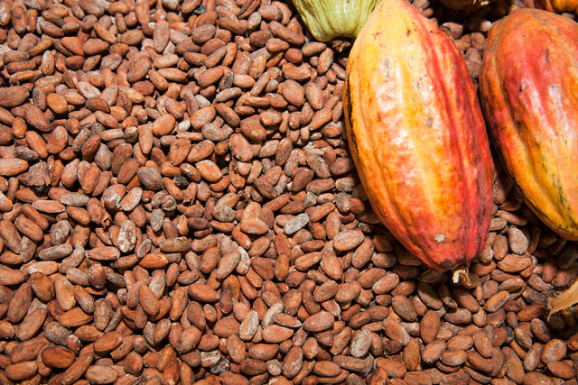 Grade AA Dried Fermented cocoa beans for sale