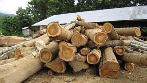 Laos Teak Wood Logs Export From Vietnam Buy Teak Wood Logs Wood Log Raw Teak Wood Product On Alibaba Com