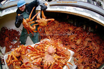 how to cook frozen king crab