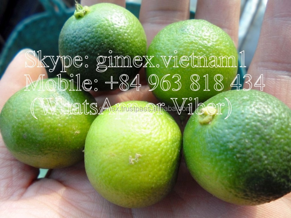 fresh calamansi / +84963818434 whatsapp