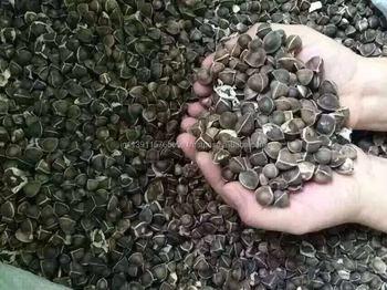 Moringa Seed (wing Less)