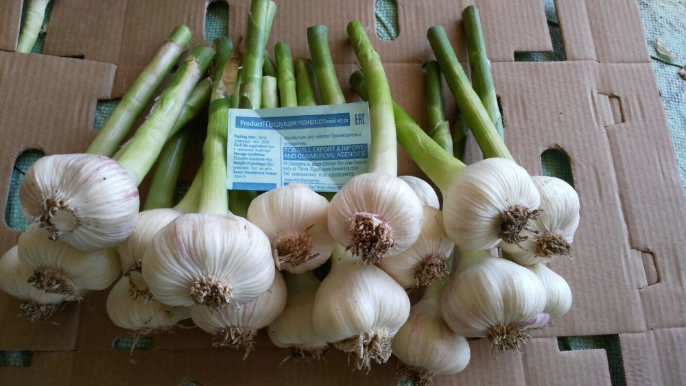 super offer garlic
