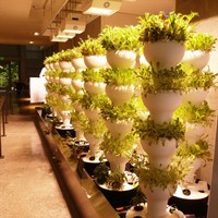 Indoor vertical hydroponic garden with automatic rotation for 56 plants