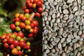 Raw Arabica And Robusta Coffee Beans