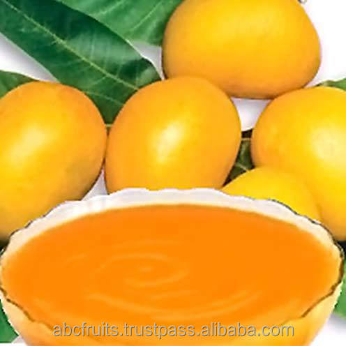 Large manufacture Totapuri Mango pulp