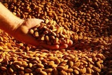 California roasted/raw/processed Almond Nuts