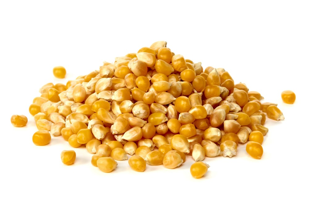Yellow Corn For Animal Feed With High Quality