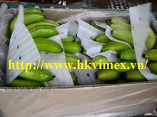 High quality fresh green banana, Mobile: + 84981877336 Viber : + 84 1229256951