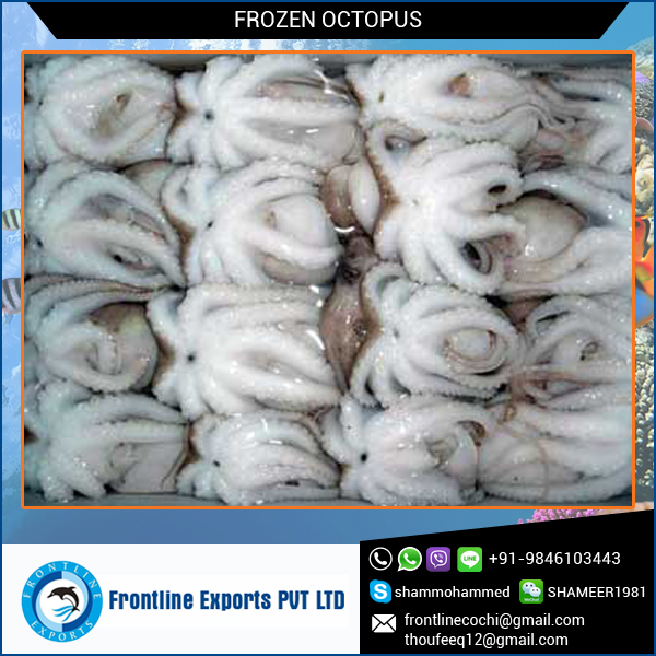 Frozen Whole Octopus for Sale with Best Quality