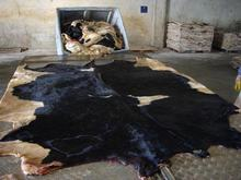 Dry/Wet cattle, donkey, sheep,Cow and Horse Skins for sale
