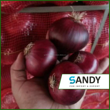 Egypt Red Onion