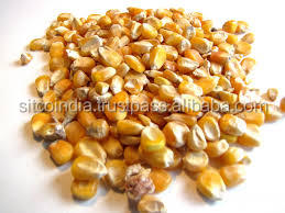 Yellow Corn Animal Feed Available From SITCO