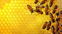 Honey/Fresh Honey/Raw Honey