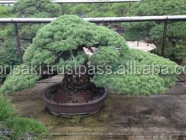 Modèle Professionnel Et Original Japonais Outils De Jardin Bonsaï ...