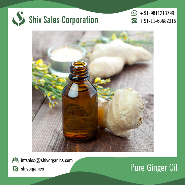 Pain Relieving Natural Ginger Essential Oil at Best Price