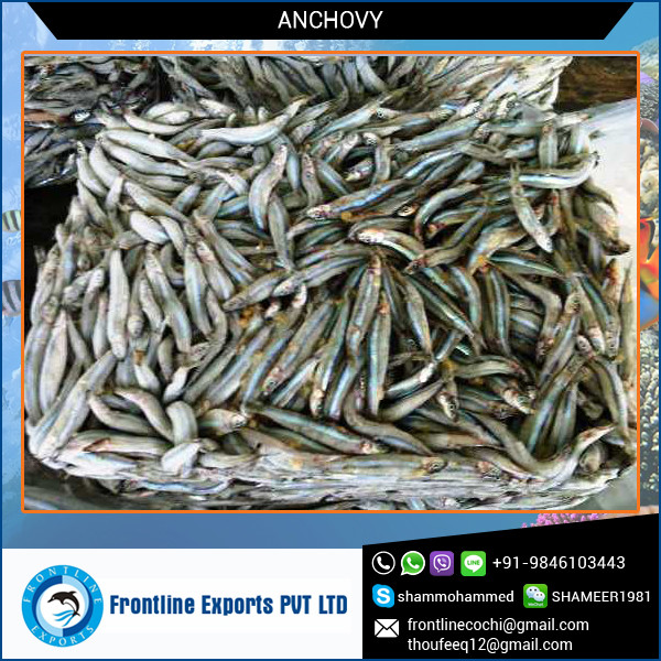 Supreme Quality and Graded Best Anchovy Fish Frozen for Bulk Purchase