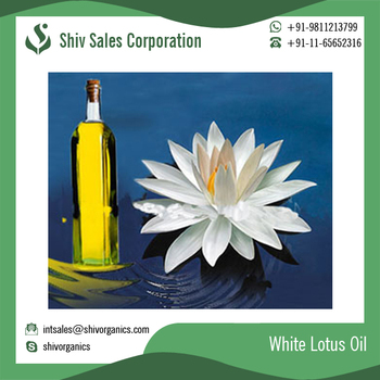 Best quality natural white lotus essential oil supplier buy white best quality natural white lotus essential oil supplier mightylinksfo