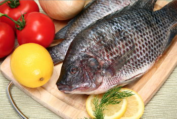 Cheap Price Frozen Wholesale Bulk Tilapia Fish