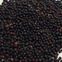 Canola oil seeds with Canada standard/ rapeseeds/canola seeds