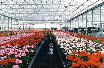 Flowers Greenhouse Film Agriculture Plastic Film Rose Greenhouse