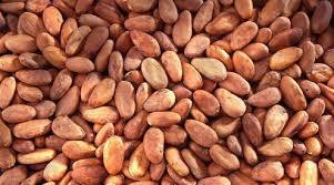High Grade Dried Raw Cocoa Beans