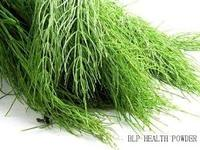 Manufacture export Natural Health Remedies Horsetail Grass Extract/Herbal Medicine horsetail extract 7% silica