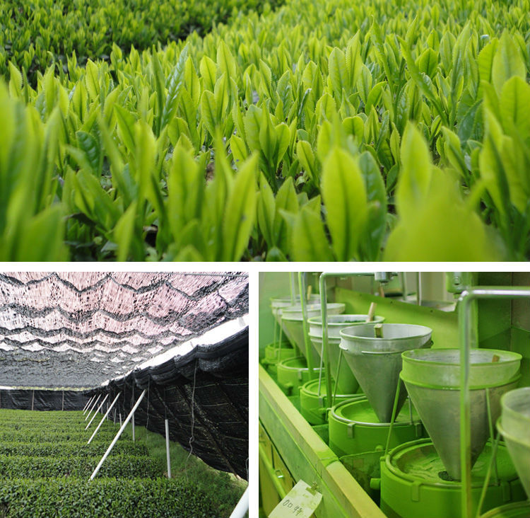 Professional Tea of EU equivalent nature distributor at reasonable prices