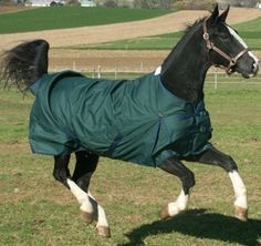 New Style Horse Rugs 2016 Modern Blanket Coloured Summer Winter